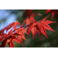1101 Acer Fire