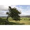 Feng Shui 1123 Distant View@Brentor with Hawthorn Tree