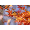 Feng Shui 1139 Japanese Maple Spray